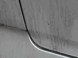 車の塗装に刺さった鉄粉と鉄粉除去剤が反応して紫色に変化した部分接写